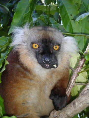 Madagascar409.jpg